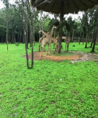 43_vinpearl-safari_2019_новый-размер