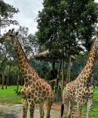 44_vinpearl-safari_2019_новый-размер