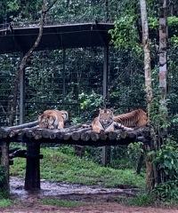 76_vinpearl-safari_2019_новый-размер